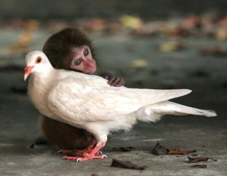 sensibilidad-animal