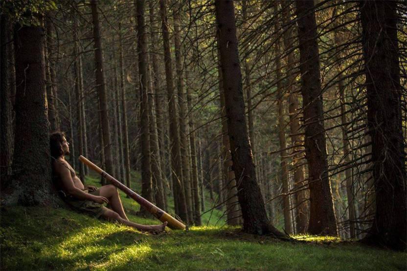 aux-arbress