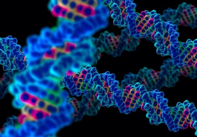 892-la-homosexualidad-esta-escrita-en-los-genes