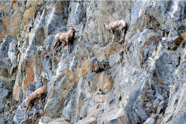 cabras locas 4