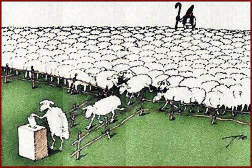 ovejas-votando