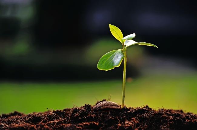 Image result for Pero una vez sembrada, crece y se convierte en el mayor de los arbustos y echa ramas tan grandes. (Marcos 4.30)