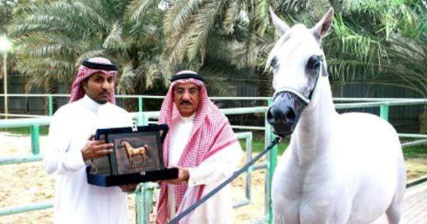 caballo_arabe