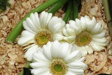 florsobreagua-blog_imagen