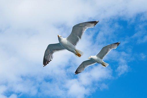 seagull-2394636__340