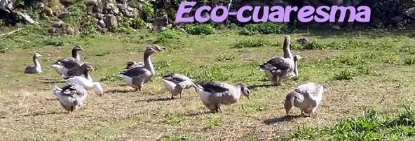 eco-cuaresma