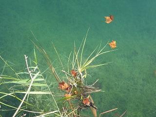llac-fulles