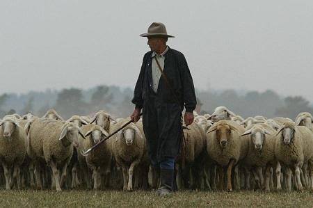 pastor-tarea