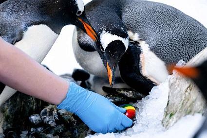 la-pareja-de-pinguinos-del-mismo-sexo-da-la-bienvenida-a-la-chica-adoptada-y-es-demasiado-linda-1
