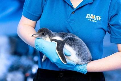 la-pareja-de-pinguinos-del-mismo-sexo-da-la-bienvenida-a-la-chica-adoptada-y-es-demasiado-linda-2