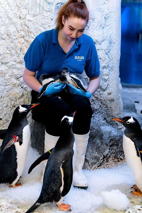 la-pareja-de-pinguinos-del-mismo-sexo-da-la-bienvenida-a-la-chica-adoptada-y-es-demasiado-linda-3
