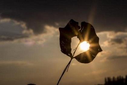 4822_sun_heart_autumn_leaf_39379