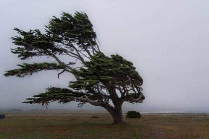arbol-viento