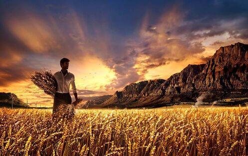 harvest-laborer